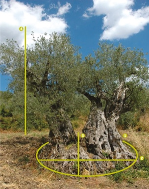 Immagine dell'olivone
