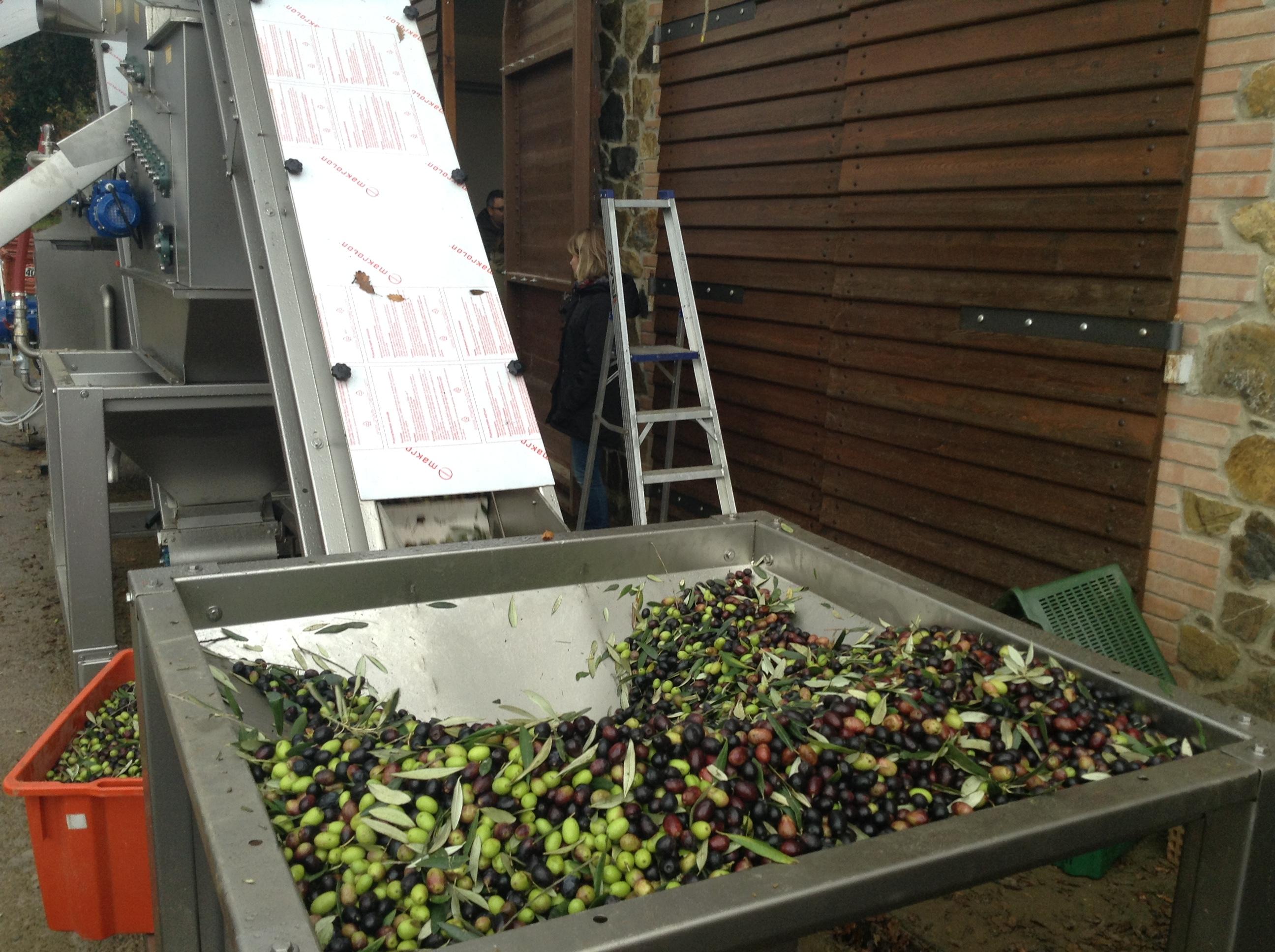 olive, frantoio, strumentazione, nastro trasportatore